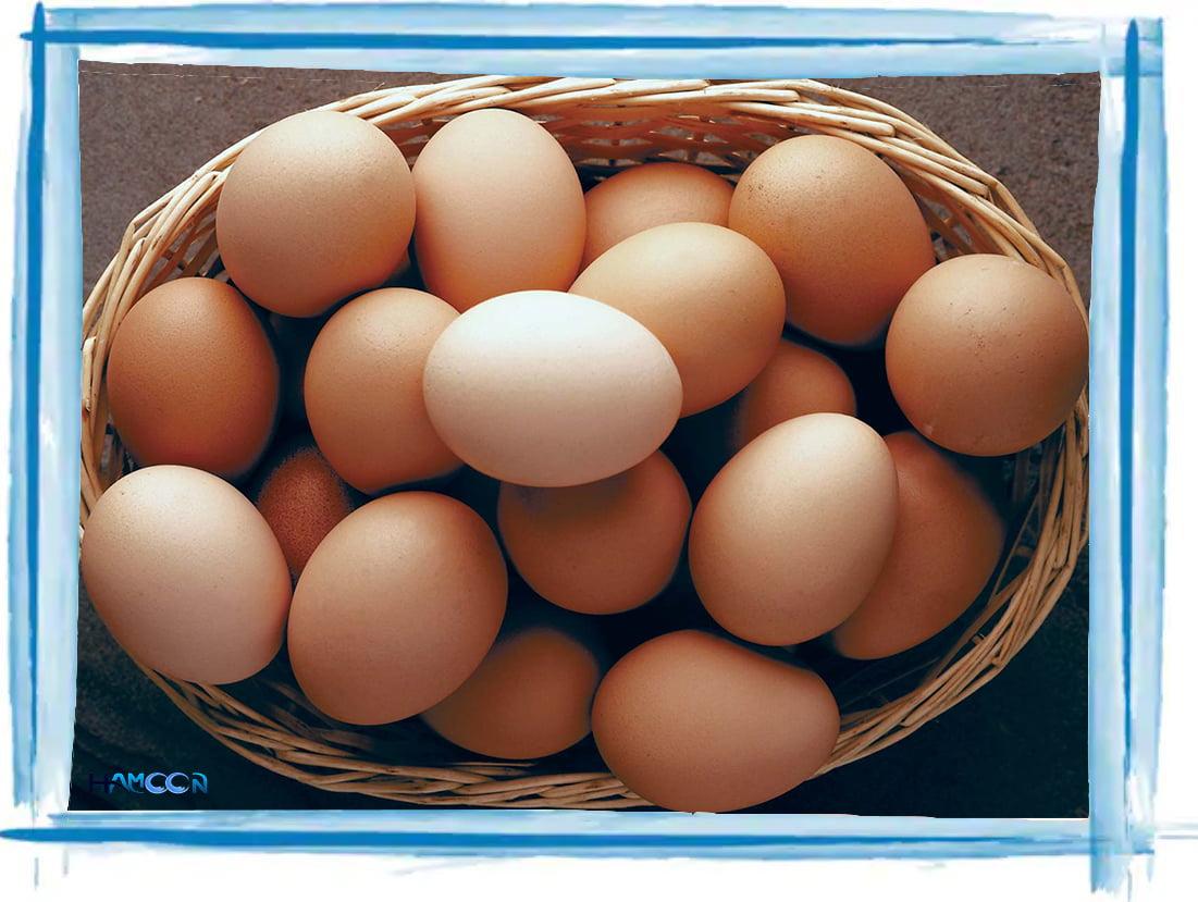 تخم مرغ و لاغری سریع چربی سوزی