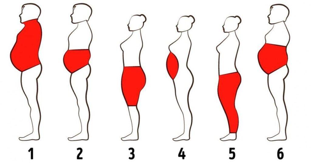 انواع چربی در بدن