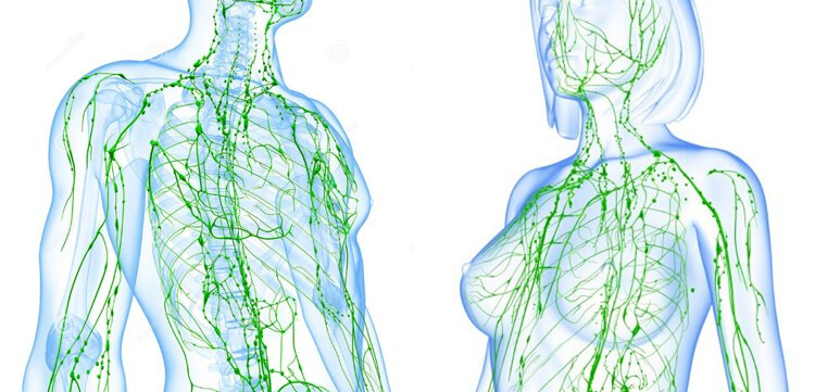 Lymphatic System Website Cover